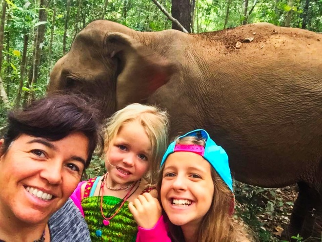 camboja elefantes