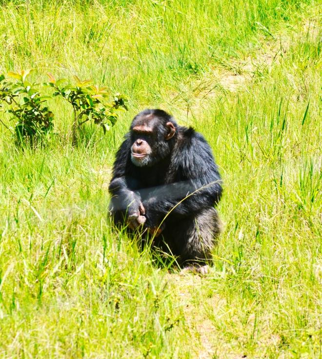 macaco africa do sul.jpeg
