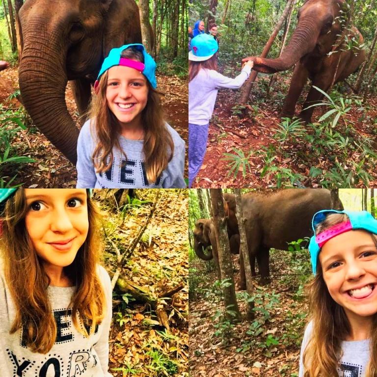 montagem elefantes