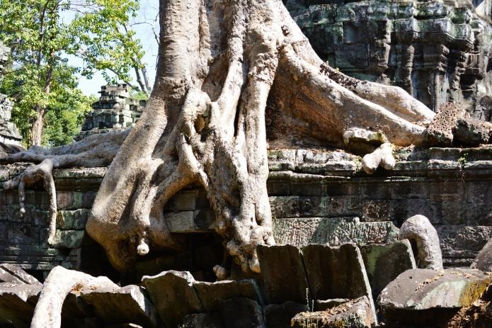 raízes camboja.jpeg